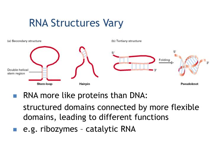 RNA Structures Vary