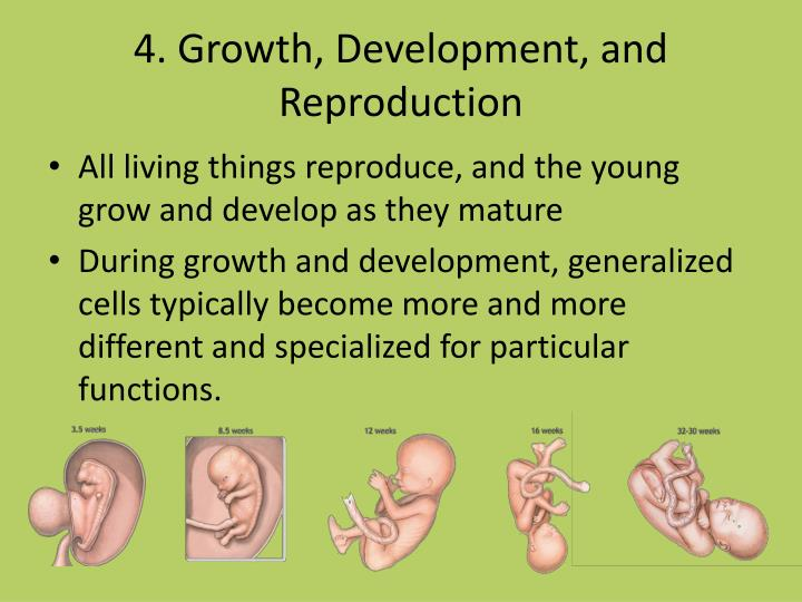 4. Growth, Development, and Reproduction