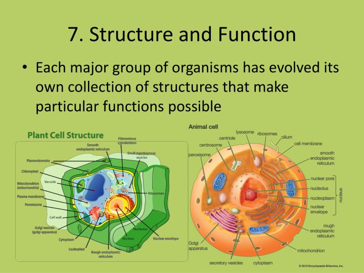 7. Structure and Function