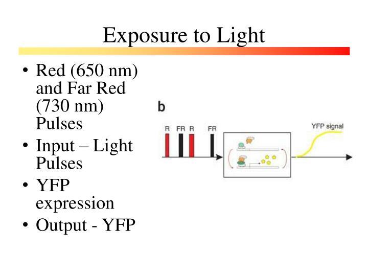 Exposure to Light