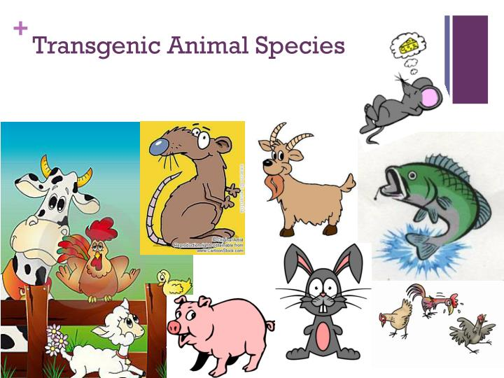 Transgenic Animal Species