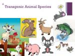 transgenic animal species