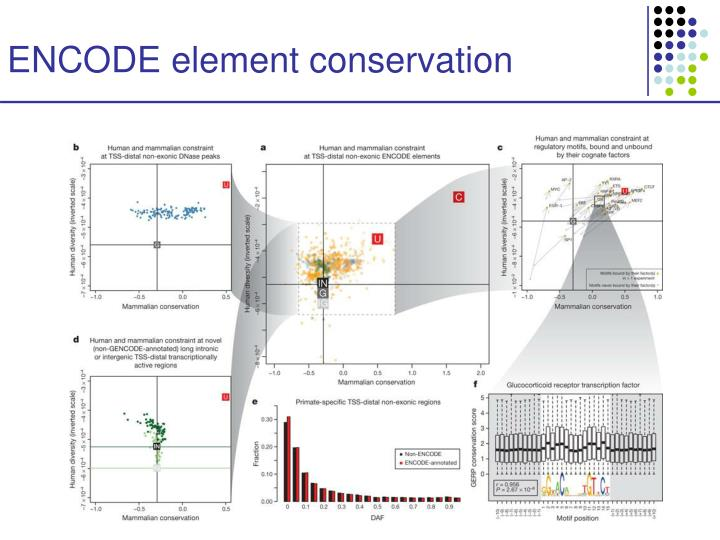 ENCODE element conservation