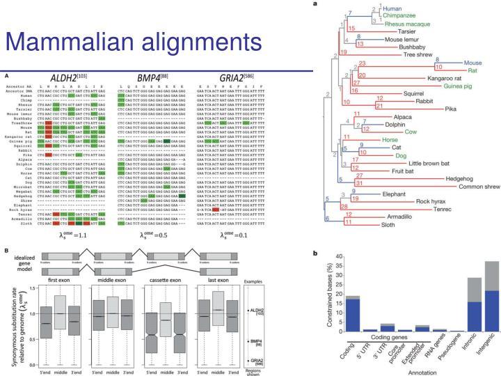 Mammalian alignments