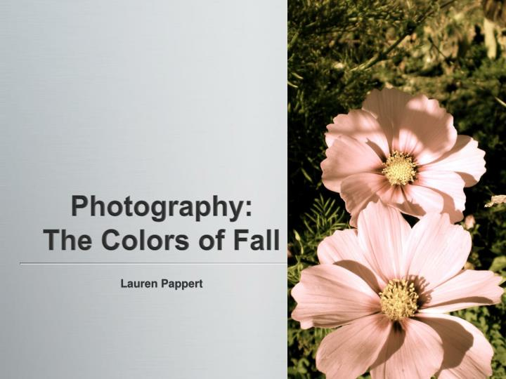 Photography the colors of fall