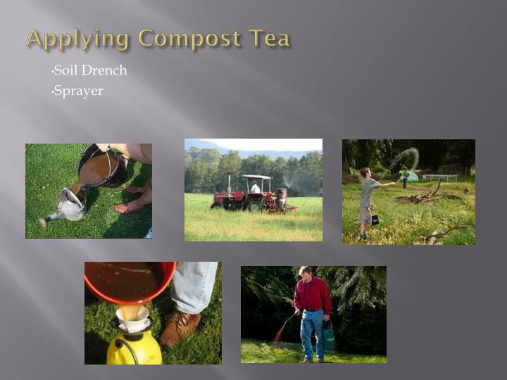 Applying Compost Tea