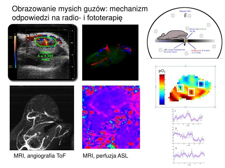 Obrazowanie mysich guzów: mechanizm odpowiedzi na radio- i fototerapię