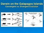 darwin on the galapagos islands convergent vs divergent evolution