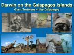 darwin on the galapagos islands giant tortoises of the galapagos