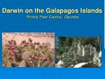 darwin on the galapagos islands prickly pear cactus opuntia