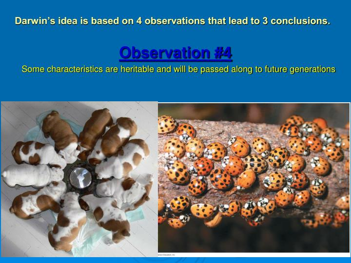 Darwin's idea is based on 4 observations that lead to 3 conclusions.