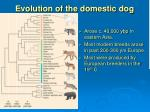 evolution of the domestic dog