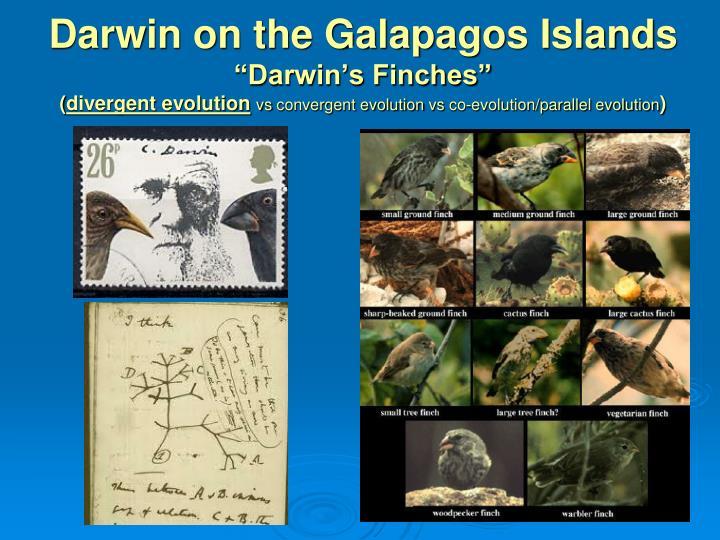 Darwin on the Galapagos Islands
