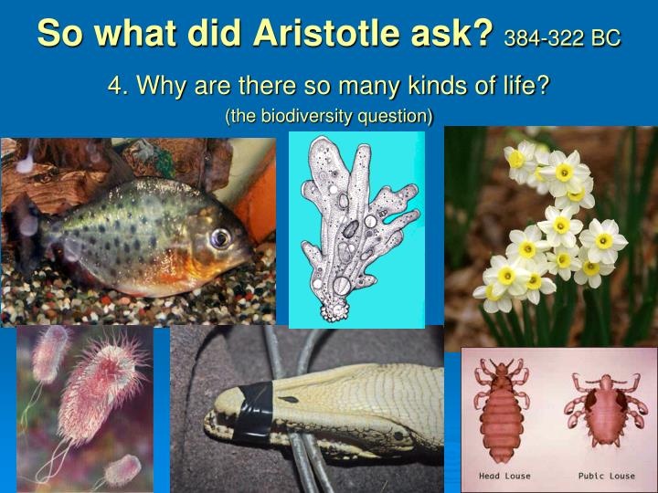 So what did Aristotle ask?