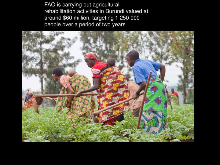 FAO is carrying out agricultural rehabilitation activities in Burundi valued at around $60 million, targeting 1 250 000 people over a period of two years