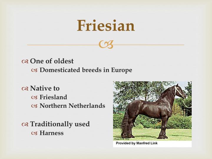 Friesian