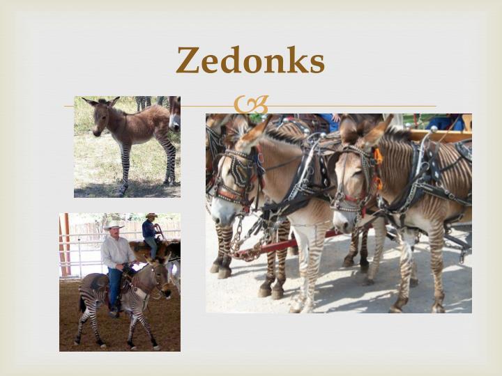 Zedonks