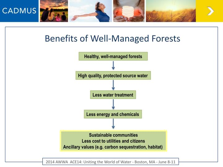 Benefits of Well-Managed Forests