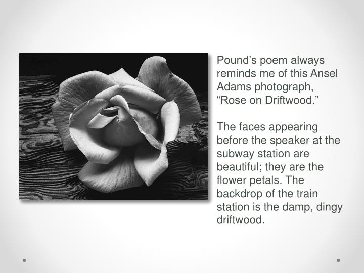 "Pound's poem always reminds me of this Ansel Adams photograph, ""Rose on Driftwood."""