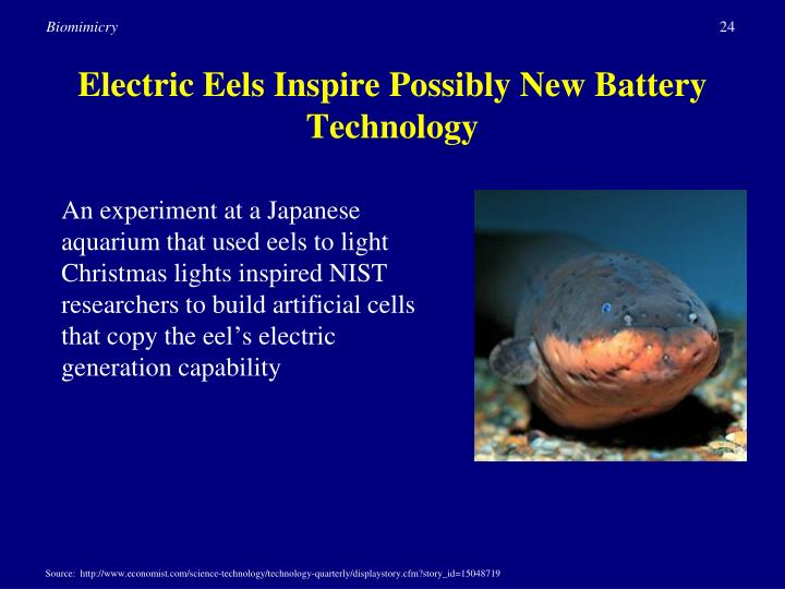 Electric Eels Inspire Possibly New Battery Technology