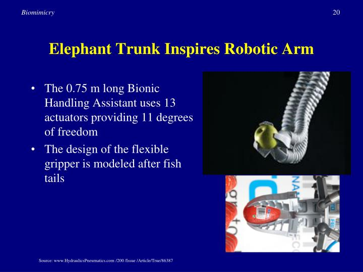 Elephant Trunk Inspires Robotic Arm