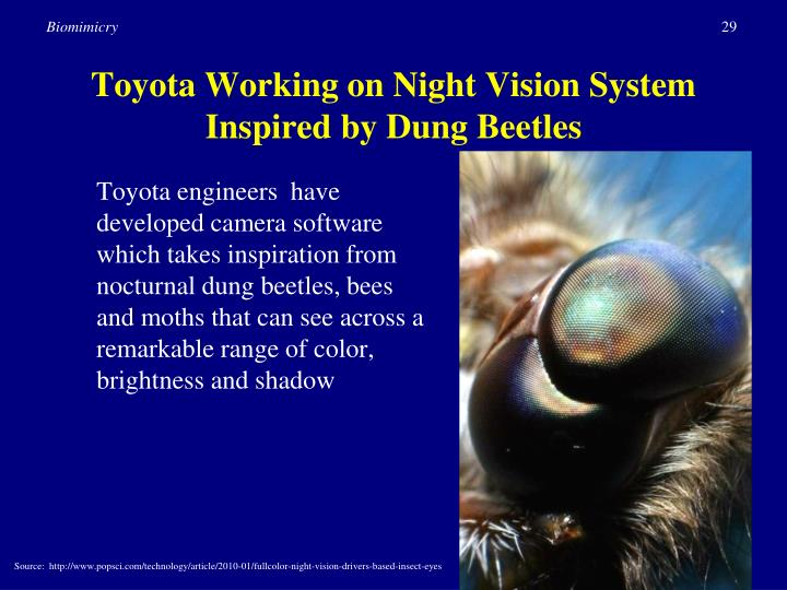 Toyota Working on Night Vision System Inspired by Dung Beetles