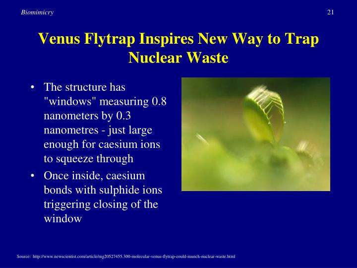 Venus Flytrap Inspires New Way to Trap Nuclear Waste
