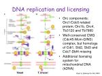 dna replication and licensing