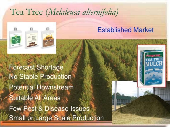 Tea Tree (