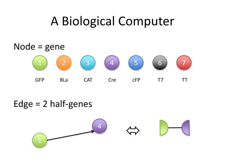 A Biological Computer