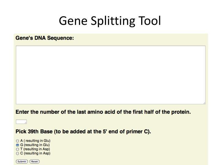Gene Splitting Tool