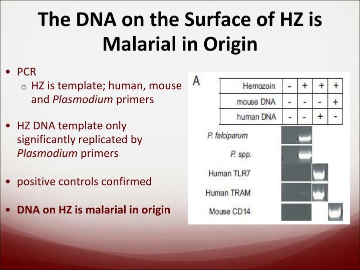 The DNA on the Surface of HZ is Malarial in Origin