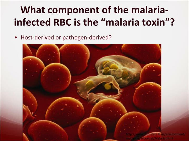 What component of the malaria infected rbc is the malaria toxin
