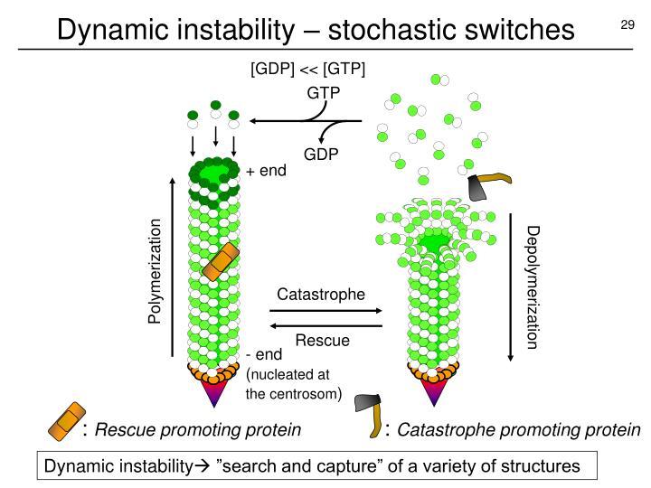Dynamic instability – stochastic switches