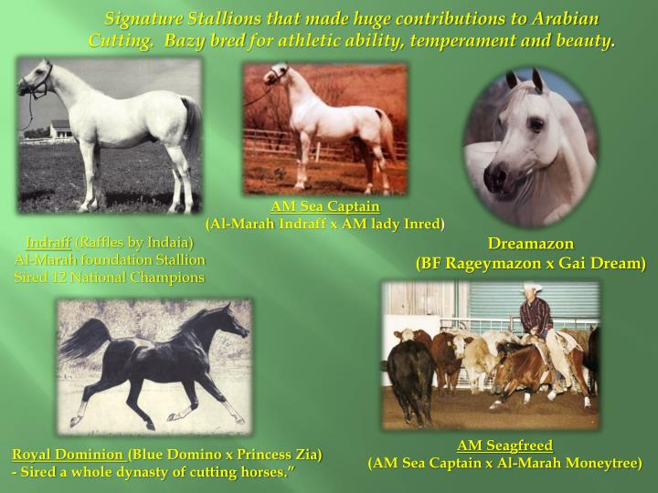 Signature Stallions that made huge contributions to Arabian Cutting.  Bazy bred