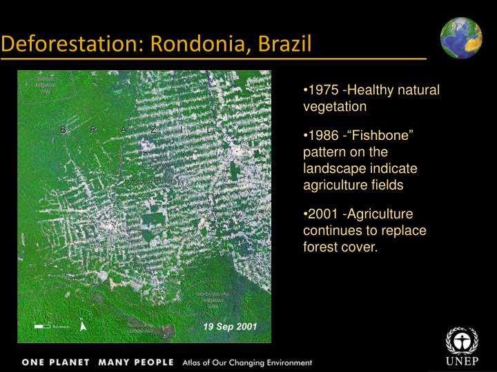 Deforestation: Rondonia, Brazil