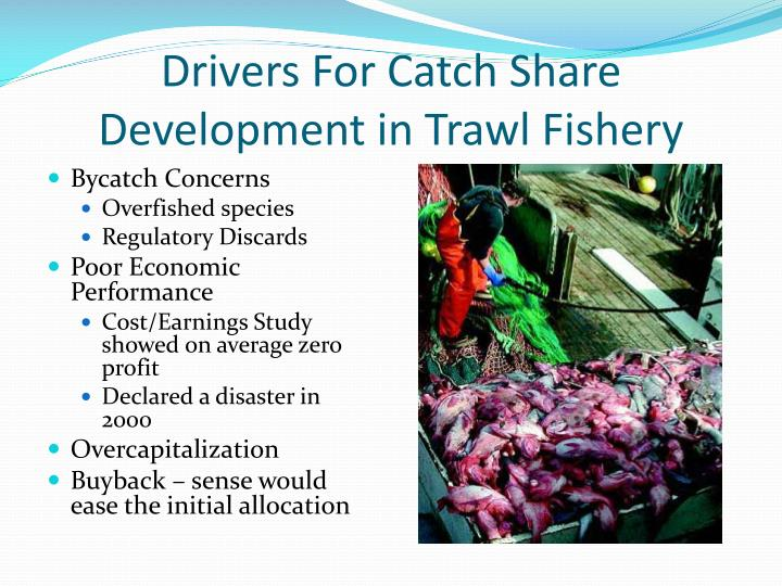 Drivers For Catch Share Development in Trawl Fishery