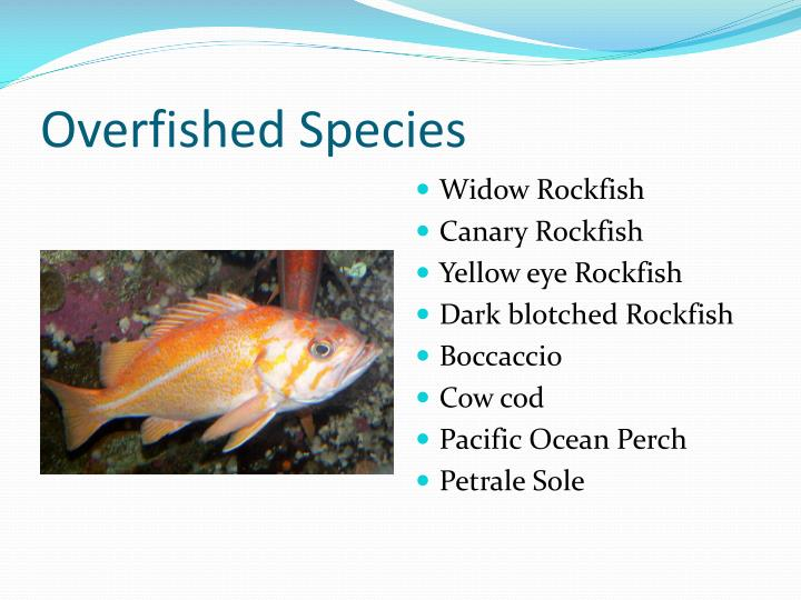 Overfished Species