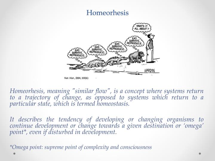 Homeorhesis