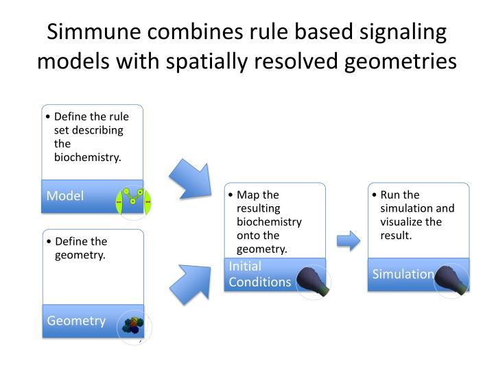 Simmune combines rule based signaling models with spatially resolved geometries