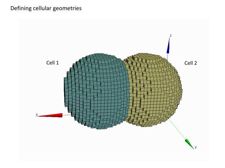 Defining cellular geometries