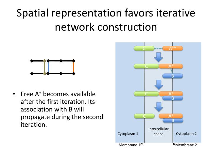 Spatial representation favors iterative network construction