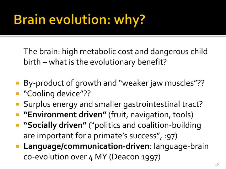 Brain evolution: why?