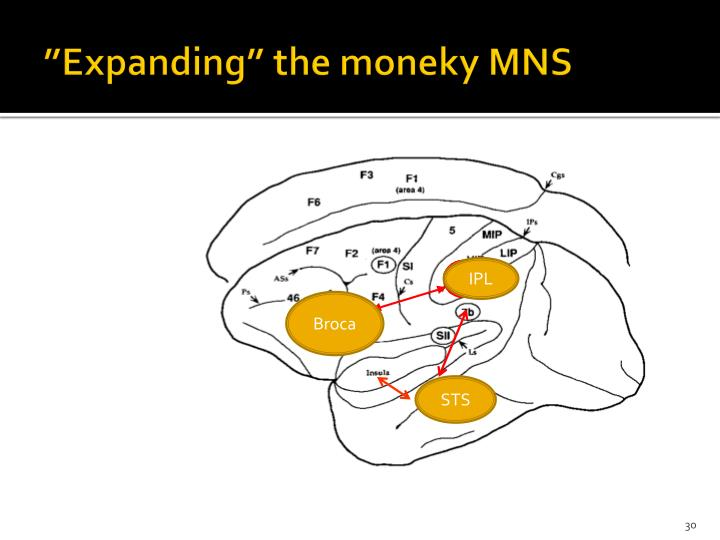 """Expanding"" the moneky MNS"