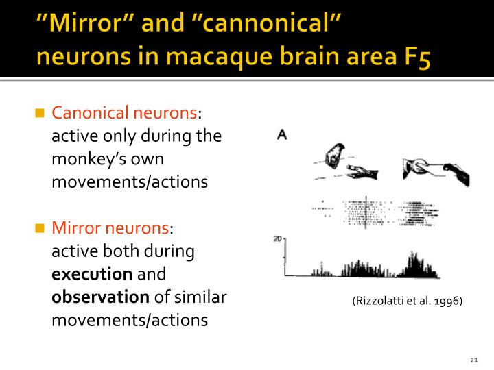 """Mirror"" and ""cannonical"" neurons in macaque brain area F5"