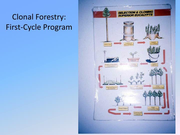 Clonal Forestry: