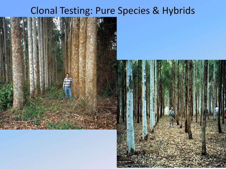 Clonal Testing: Pure Species & Hybrids