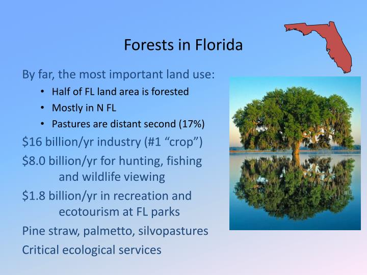 Forests in Florida