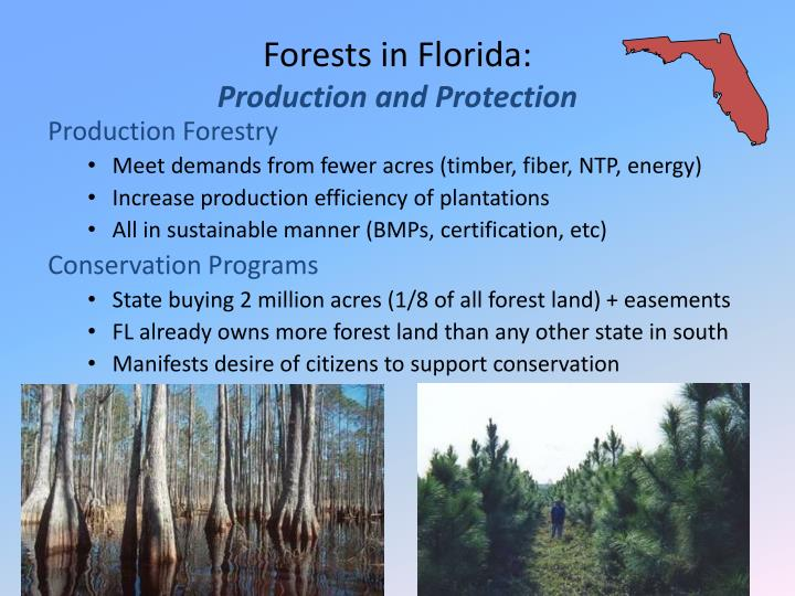 Forests in Florida: