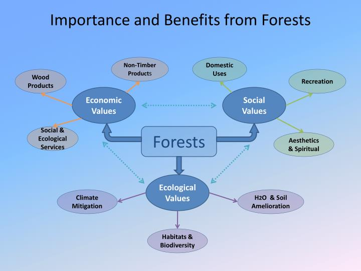 Importance and Benefits from Forests